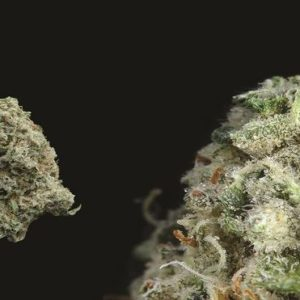 Buy Banana Kush Marijuana Online UK
