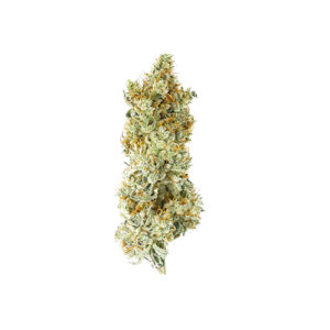 Buy Gorilla Glue #4 Marijuana Online UK