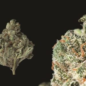 Buy Triple Diesel Marijuana Online UK