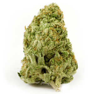 Buy Champagne Blue Dream Marijuana Online UK
