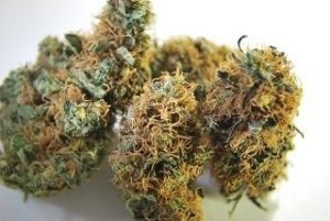 Buy Sour Tsunami Marijuana Online UK